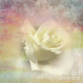White Rose Textured by Luther Fine Art