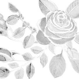 White Rose Watercolor Clear Cropped Transparent Background Designed for Shirts by Delynn Addams