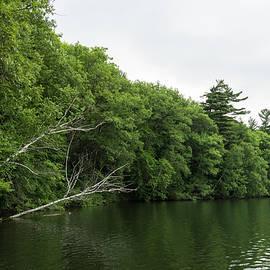 White Skeletons - Verdant Forest Lake with Fallen Trees by Georgia Mizuleva