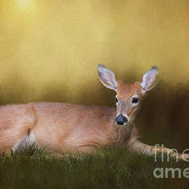 White Tailed Button Buck Evening  by Sharon McConnell