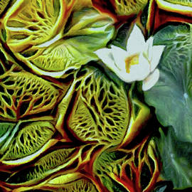 White Water Lily by Susan Maxwell Schmidt