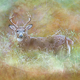 Whitetail Buck Painterly Autumn by Patti Deters