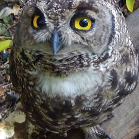 Who Gives a Hoot? by Michael Durst