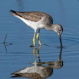 Who is that Pretty Bird by TJ Baccari