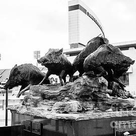 Wild Band of Razorbacks Statue -BW by Scott Pellegrin