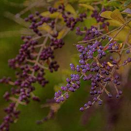 Wild berries by John Schultz