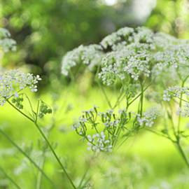 Wild flowers by Corinne Welp