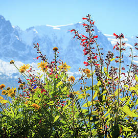 Wild flowers in the Alps by Alexey Stiop