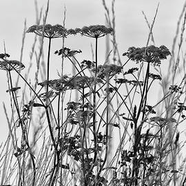 Wild Herbs in Black and White by Maria Meester