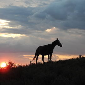 Wild Horse at Sun Down 3 by Amanda R Wright