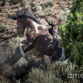 Wild Horse Fight 1 by Webb Canepa