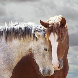 Wild Horse Loves by Barbara Sophia Travels