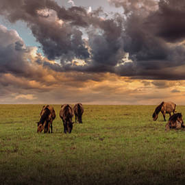 Wild horse pasture by Igor Klyakhin