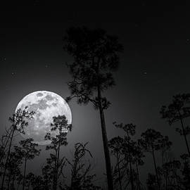 Wild Moon by Mark Andrew Thomas