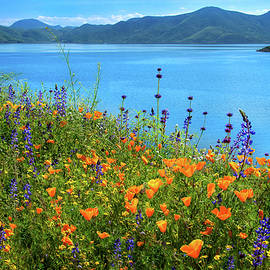 Wild Riot of Color at Diamond Valley Lake - Superbloom 2019 by Lynn Bauer