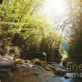 Wild river flowing water in dark forest with morning sunlight by Gregory DUBUS