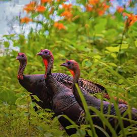 Wild Turkey Trio North Carolina by Bellesouth Studio