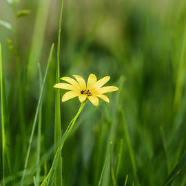 Wildflower by As MemoriesLiveOn