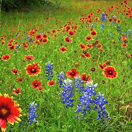 Wildflower Beauty in the Hill Country by Lynn Bauer