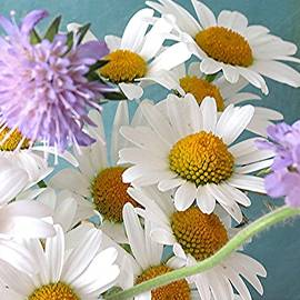 Wildflower bouquet by Barron Holland