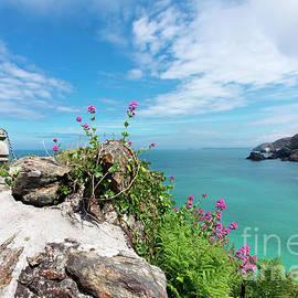 Wildflower Coast by Terri Waters