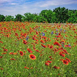 Wildflower Love in the Hill Country by Lynn Bauer