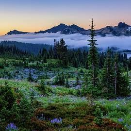 Wildflower meadow at sunrise by Lynn Hopwood