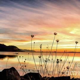 Wildflower Silhouette Sunset by Beautiful Oregon