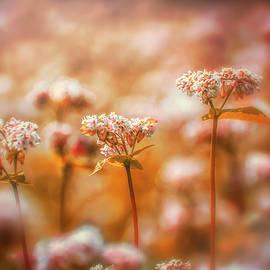 Wildflower Warmth by Jim Love