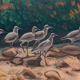 Willets on the Move by Tara D Kemp