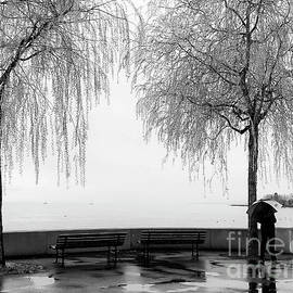 Willows Weeping in the Rain by Catherine Sullivan