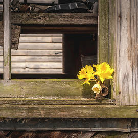 Window To Spring by Jim Love
