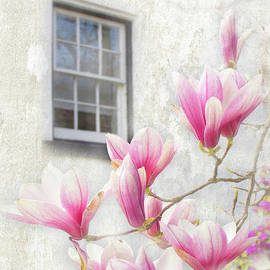 Window with A Magnolia View by Barbara McMahon