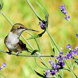 Windy Lavender Perch by Carmen Macuga