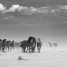 Windy Trek Black and White. by Paul Martin
