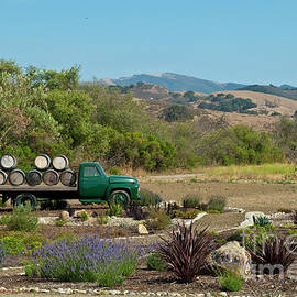 Wine Country Trail by Julieanne Case