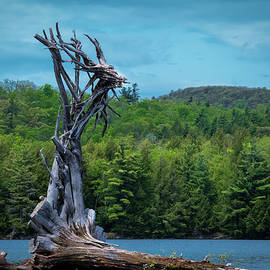 Winged Faery Jabe by Linda MacFarland
