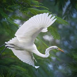 Wings of Wonder by Mark Andrew Thomas