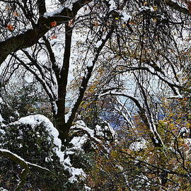 Winter Abstract by Glenn McCarthy Art and Photography