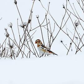 Winter Beauties by Debbie Oppermann