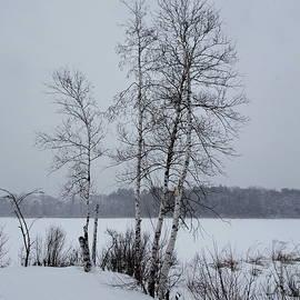 Winter Birches by Lyuba Filatova