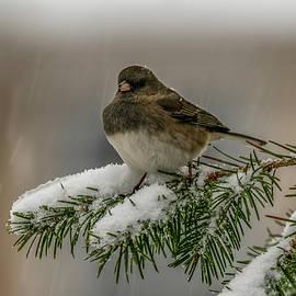 Winter Bird by Cathy Kovarik