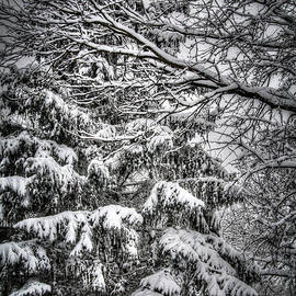 Winter Bliss by Deborah Klubertanz