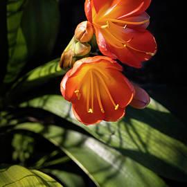 Winter Bloom 1 by Eileen Brabender