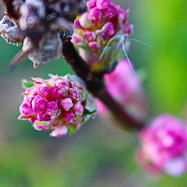 Winter Blossom Glory by Loretta S