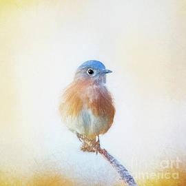 Winter Bluebird - digital pencil by Scott Pellegrin
