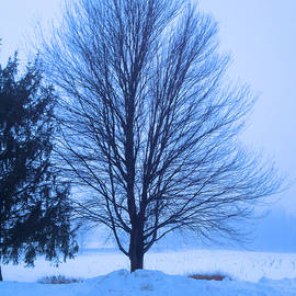 Winter Blues by Femina Photo Art By Maggie