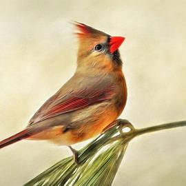 Winter Cardinal by Christina Rollo