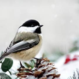 Winter Chickadee by Christina Rollo