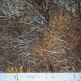Winter Contrasts by Trey Foerster